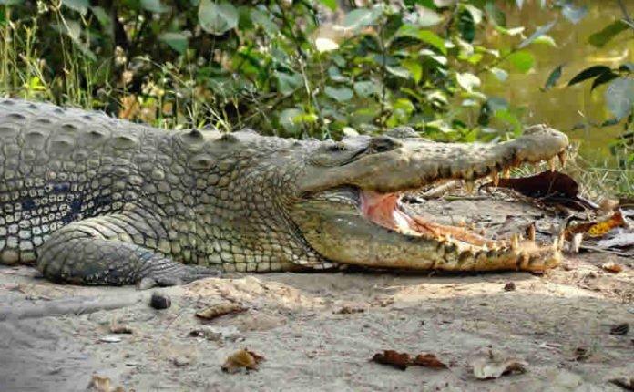 Bhitarakanika National Park