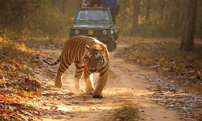 Simlipal National Park - safaris