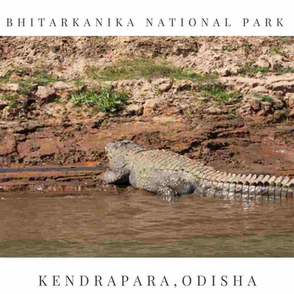 Bhitarakanika National Park - Crocodile