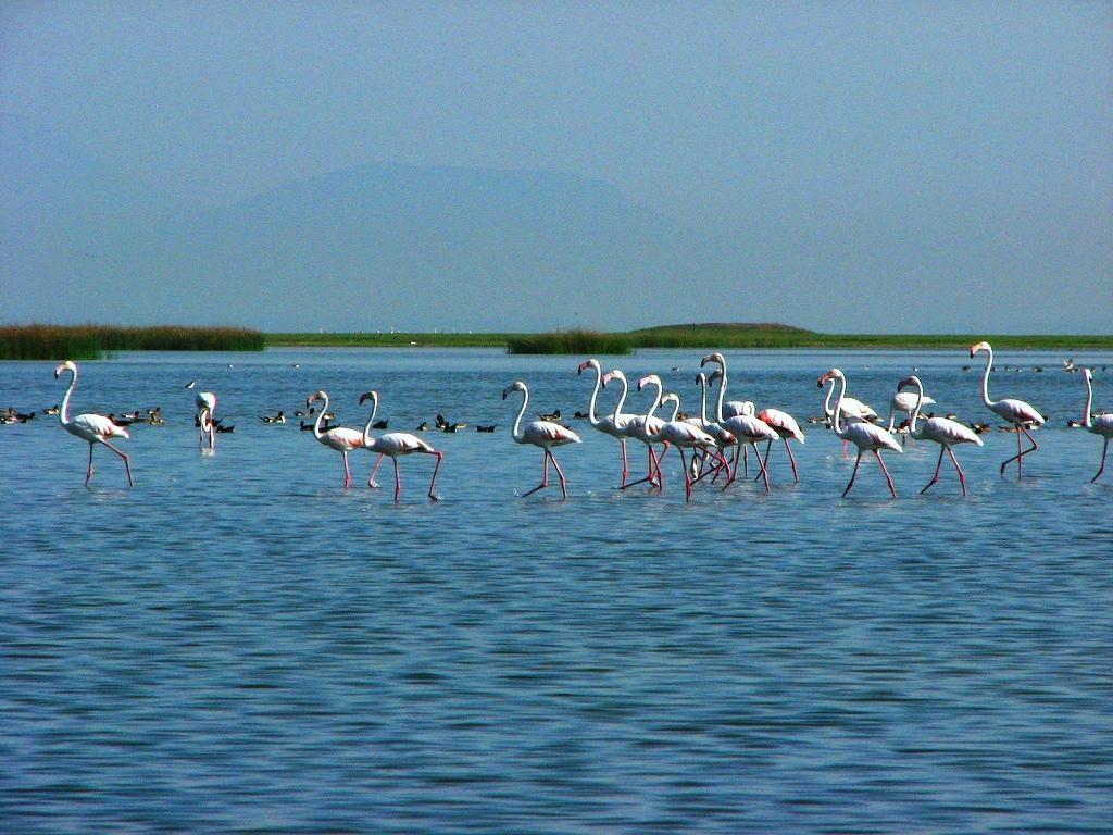 Chilika Lake - Odisha