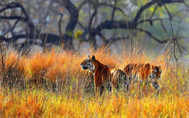Similipal National Park Tiger Reserve