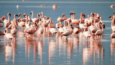 Nalabana Bird Sanctuary, Odisha