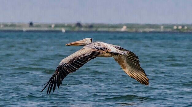 Odisha's Nalabana Bird Sanctuary