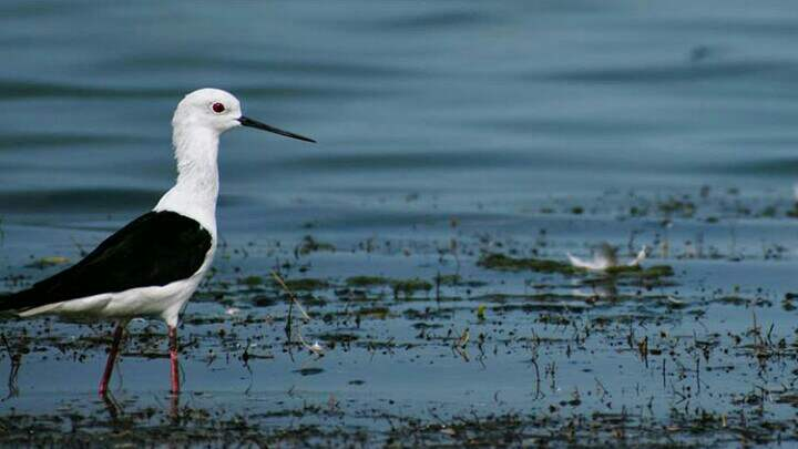 Nalabana Bird Sanctaury Of Odisha