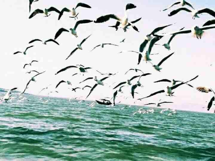 Migratory Birds at Nalaban Bird Sanctuary